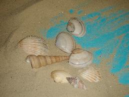 La thérapie par le jeu de sable, une spécificité jungienne