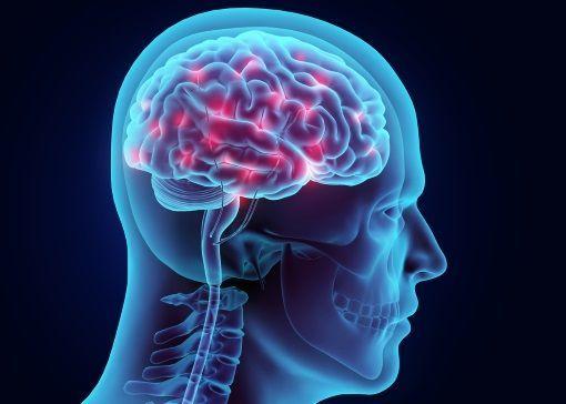 Le cerveau en lumières