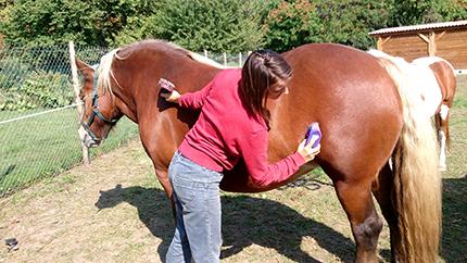 Des chevaux au cœur de l'hôpital