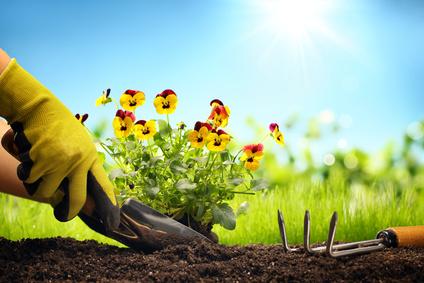 Un guide pour concevoir un jardin thérapeutique