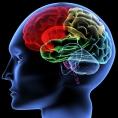 Autisme : des combinaisons de gènes spécifiques